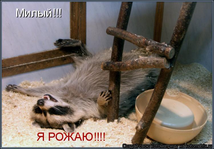 Котоматрица: Милый!!! Я РОЖАЮ!!!!