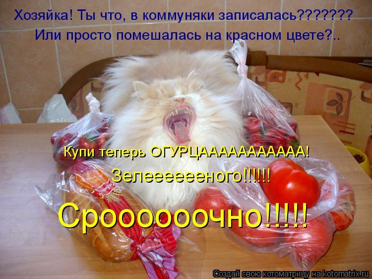 Котоматрица: Хозяйка! Ты что, в коммуняки записалась??????? Или просто помешалась на красном цвете?.. Купи теперь ОГУРЦААААААААААА! Зелееееееного!!!!!! Сроооо