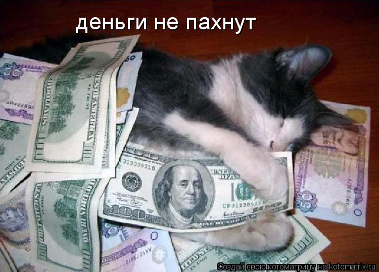 Котоматрица: деньги не пахнут