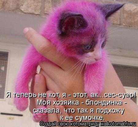 Котоматрица: Я теперь не кот, я - этот, ак...сес-суар! Моя хозяйка - блондинка - сказала, что так я подхожу к ее сумочке.