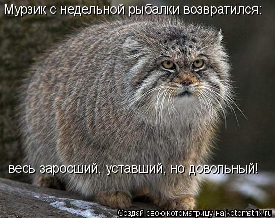 Котоматрица: Мурзик с недельной рыбалки возвратился: весь заросший, уставший, но довольный!