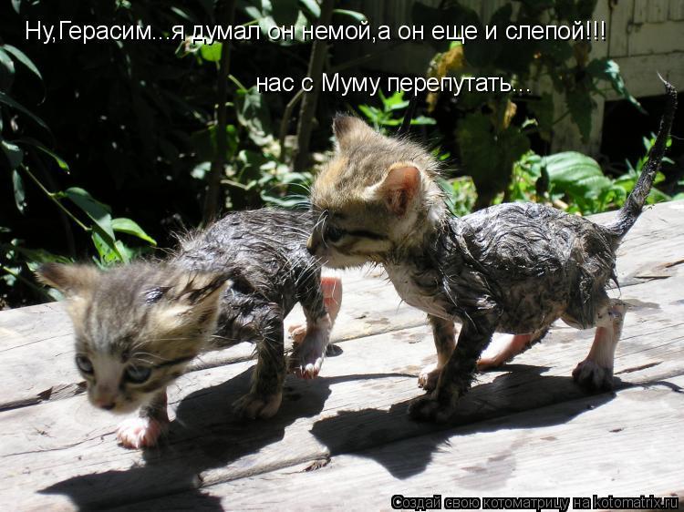 Котоматрица: Ну,Герасим...я думал он немой,а он еще и слепой!!! нас с Муму перепутать...