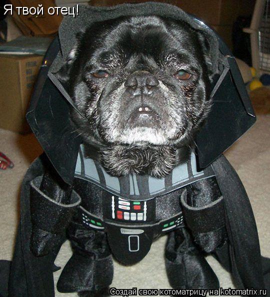 Котоматрица: Я твой отец!