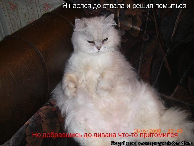 Котоматрица: Я наелся до отвала и решил помыться, Но добравшись до дивана что-то притомился