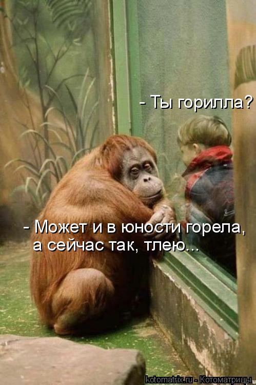 Котоматрица: - Ты горилла?  - Может и в юности горела, а сейчас так, тлею...