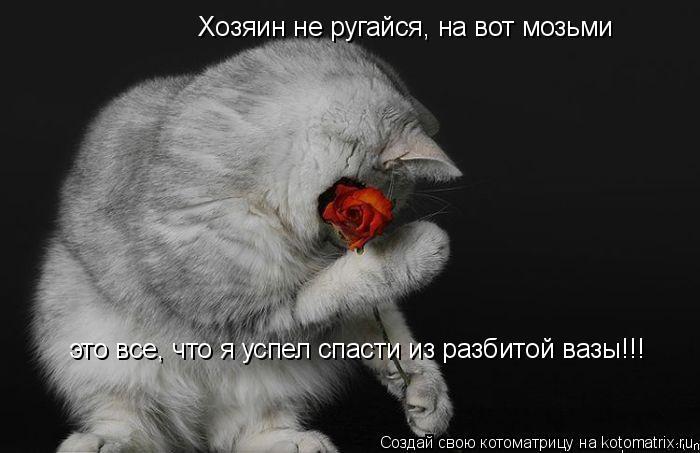 Котоматрица: Хозяин не ругайся, на вот мозьми это все, что я успел спасти из разбитой вазы!!!