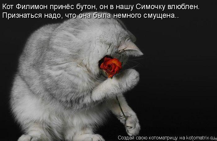 Котоматрица: Кот Филимон принёс бутон, он в нашу Симочку влюблен. Признаться надо, что она была немного смущена..