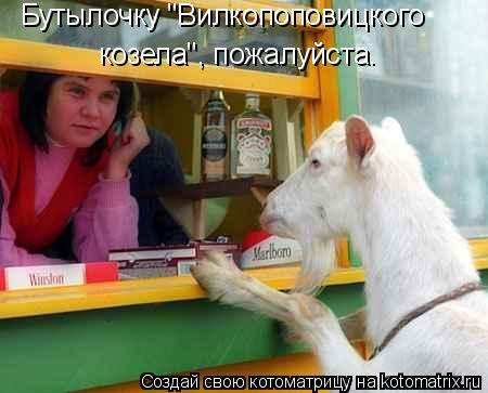 """Котоматрица: Бутылочку """"Вилкопоповицкого козела"""", пожалуйста."""