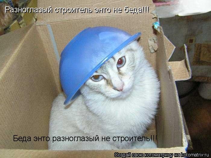 Котоматрица: Разноглазый строитель энто не беда!!! Беда энто разноглазый не строитель!!!