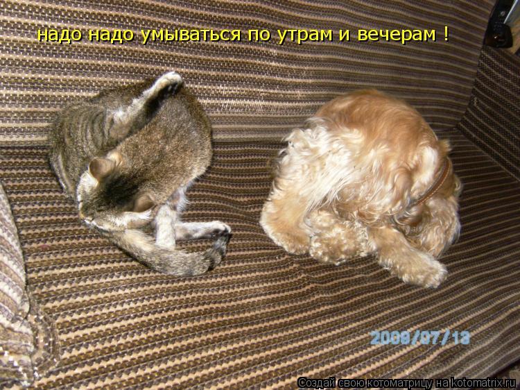 Котоматрица: надо надо умываться по утрам и вечерам !
