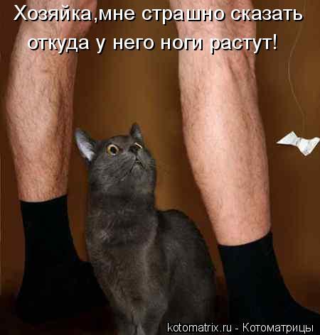 Котоматрица: Хозяйка,мне страшно сказать  откуда у него ноги растут!