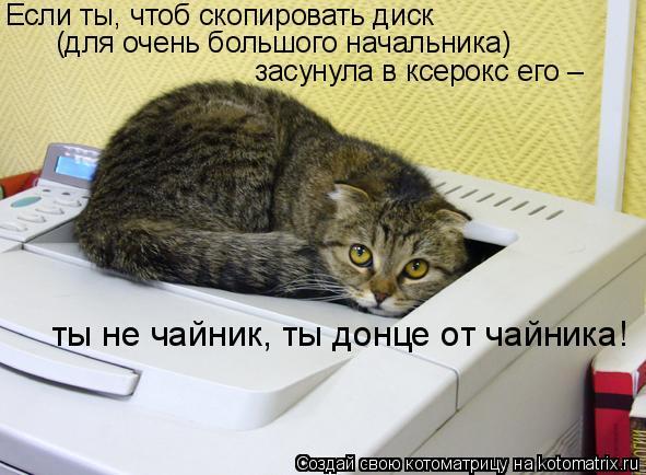 Котоматрица: Если ты, чтоб скопировать диск (для очень большого начальника) засунула в ксерокс его – ты не чайник, ты донце от чайника!