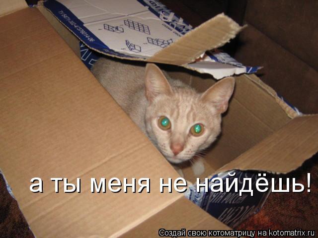 Котоматрица: а ты меня не найдёшь!