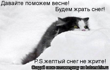 Котоматрица: Давайте поможем весне! Будем жрать снег! P.S.желтый снег не жрите!