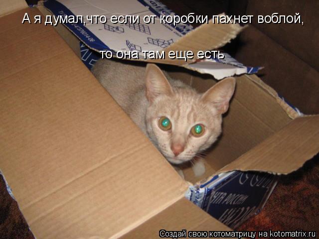Котоматрица: А я думал,что если от коробки пахнет воблой, то она там еще есть