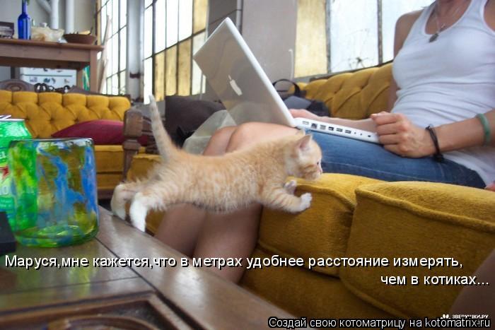 Котоматрица: чем в котиках... Маруся,мне кажется,что в метрах удобнее расстояние измерять,