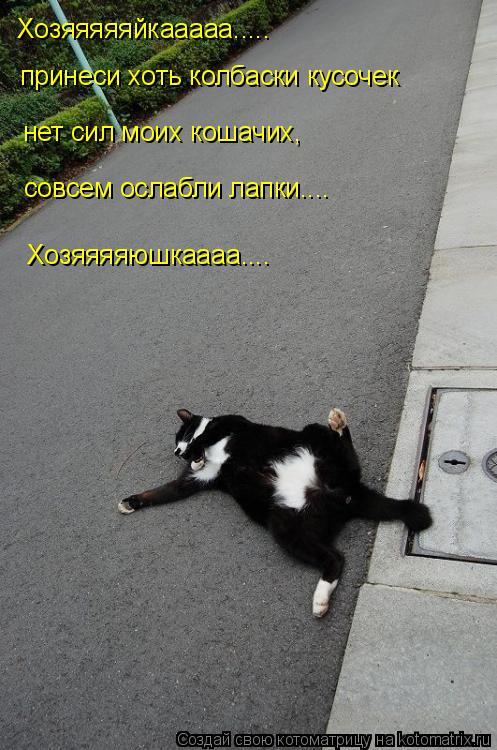 Котоматрица: Хозяяяяяйкааааа.....  принеси хоть колбаски кусочек нет сил моих кошачих,  совсем ослабли лапки.... Хозяяяяюшкаааа....