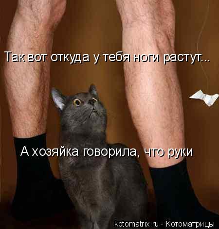 Котоматрица: А хозяйка говорила, что руки Так вот откуда у тебя ноги растут...