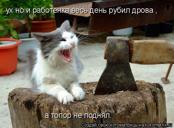 Котоматрица: ух но и работёнка весь день рубил дрова , а топор не поднял.