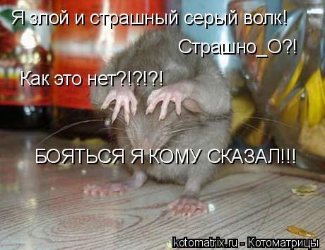 Котоматрица: Я злой и страшный серый волк! Страшно_О?! Как это нет?!?!?! БОЯТЬСЯ Я КОМУ СКАЗАЛ!!!