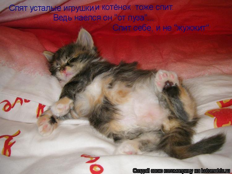 """Котоматрица: Спят усталые игрушки, и котёнок  тоже спит. Ведь наелся он """"от пуза""""... Спит себе, и не """"жужжит"""""""