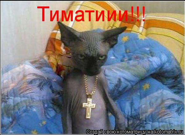 Котоматрица: Тиматиии!!!