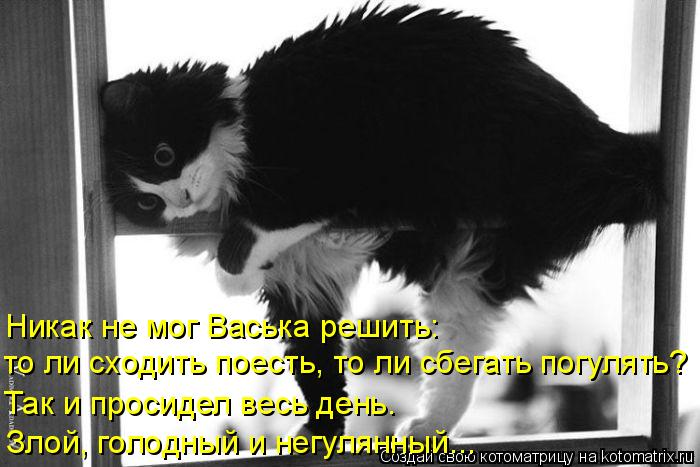 Котоматрица: Никак не мог Васька решить:  то ли сходить поесть, то ли сбегать погулять? Так и просидел весь день. Злой, голодный и негулянный...