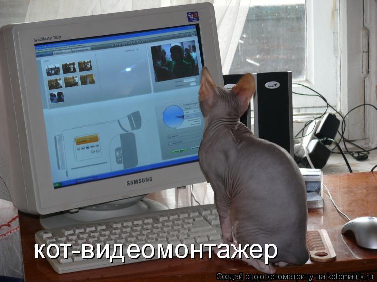 Котоматрица: кот-видеомонтажер
