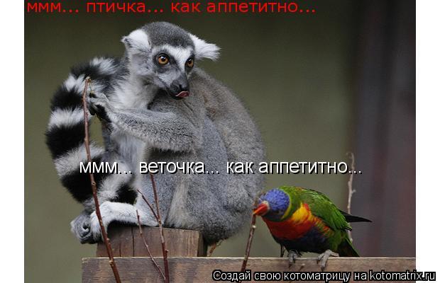 Котоматрица: ммм... веточка... как аппетитно... ммм... птичка... как аппетитно...