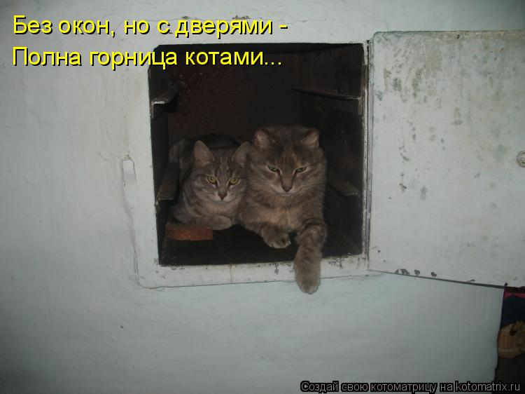 Котоматрица: Без окон, но с дверями - Полна горница котами...