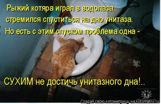 Котоматрица: Рыжий котяра играл в водолаза, стремился спуститься на дно унитаза. Но есть с этим спуском проблема одна -  СУХИМ не достичь унитазного дна!..