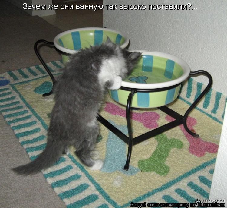 Котоматрица: Зачем же они ванную так высоко поставили?...