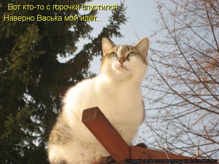 Котоматрица: Вот кто-то с горочки спустился Наверно Васька мой идет...