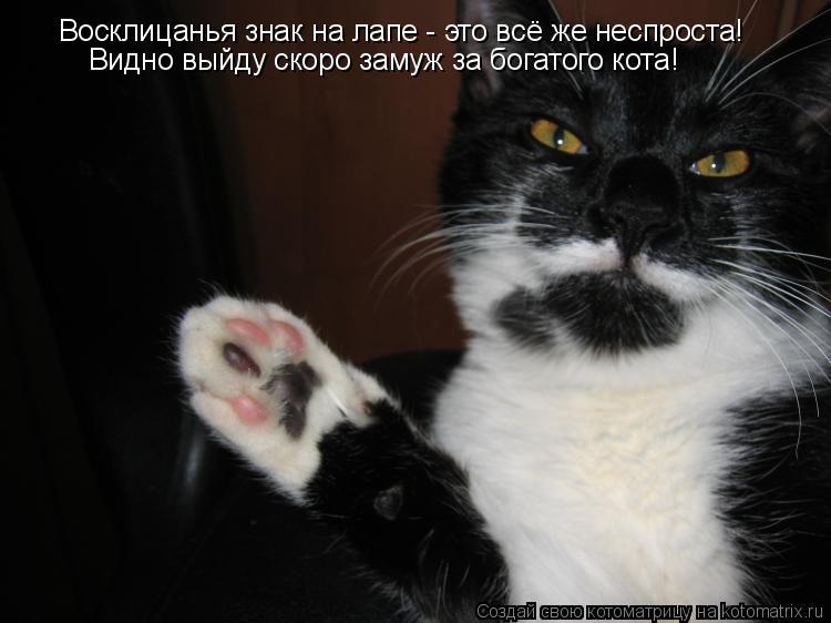 Котоматрица: Восклицанья знак на лапе - это всё же неспроста! Видно выйду скоро замуж за богатого кота!