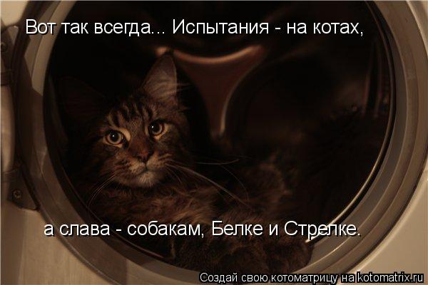 Котоматрица: Вот так всегда... Испытания - на котах,  а слава - собакам, Белке и Стрелке.