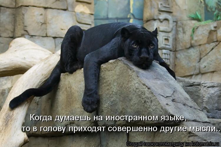 Котоматрица: Когда думаешь на иностранном языке, то в голову приходят совершенно другие мысли...