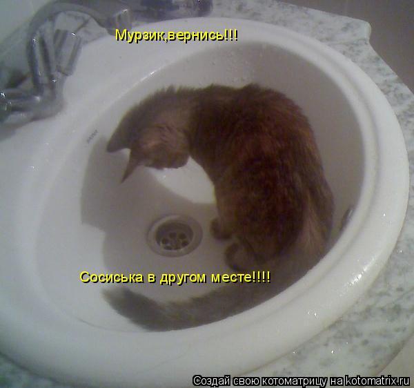 Котоматрица: Мурзик,вернись!!! Сосиська в другом месте!!!!