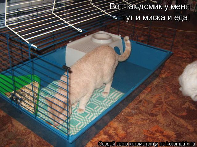 Котоматрица: Вот так домик у меня  тут и миска и еда!