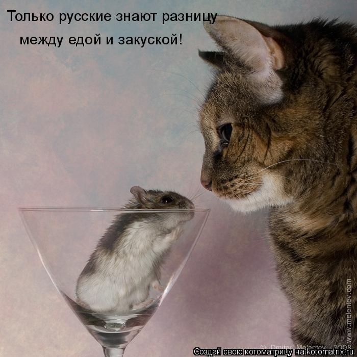 Котоматрица: Только русские знают разницу  между едой и закуской!