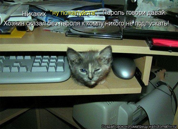 """Котоматрица: Никаких  """"ну пожалуйста"""". Пароль говори давай. Хозяин сказал без пароля к компу никого не подпускать!"""