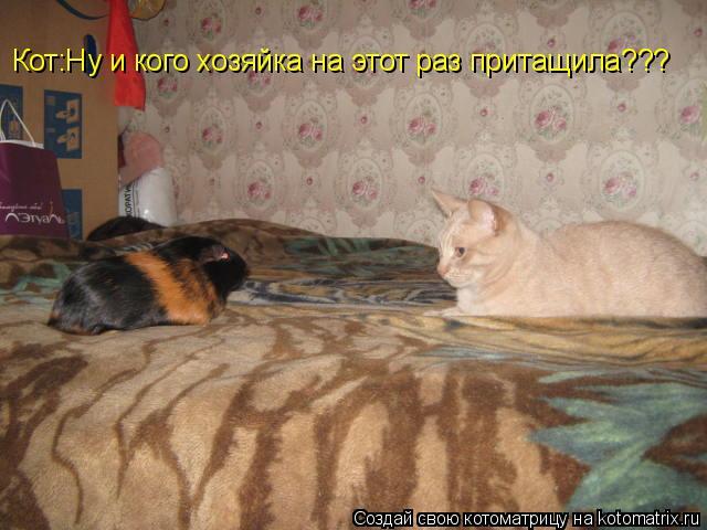 Котоматрица: Кот:Ну и кого хозяйка на этот раз притащила???