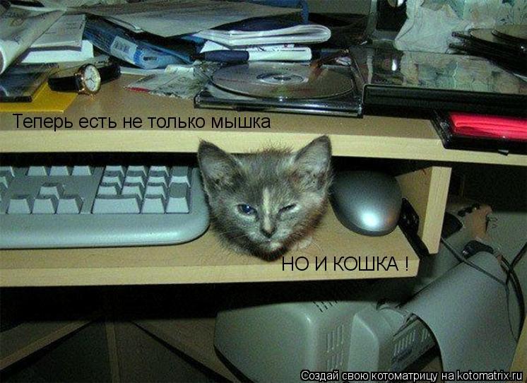 Котоматрица: Теперь есть не только мышка НО И КОШКА !