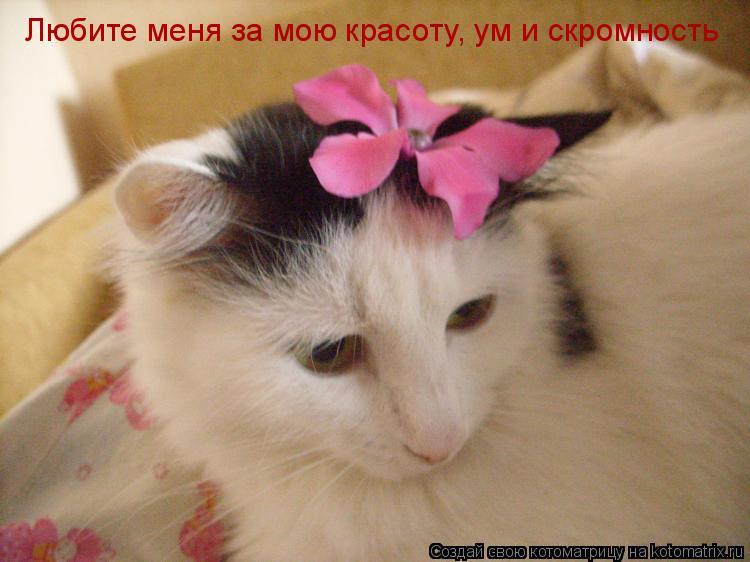 Котоматрица: Любите меня за мою красоту, ум и скромность