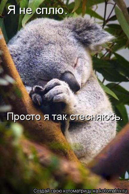 Котоматрица: Я не сплю.  Просто я так стесняюсь.
