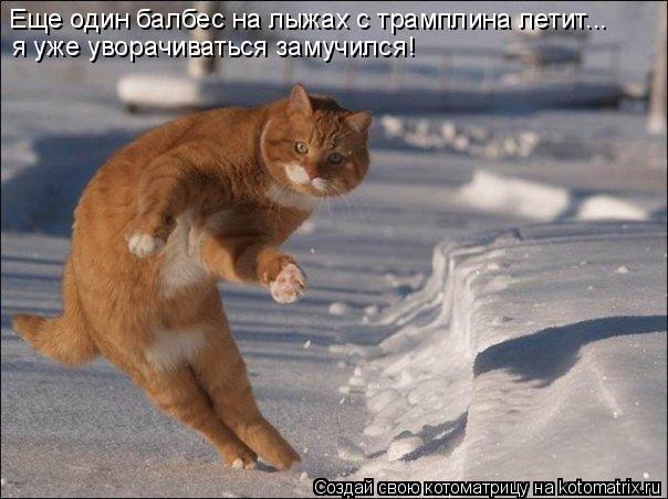 Котоматрица: Еще один балбес на лыжах с трамплина летит... я уже уворачиваться замучился!