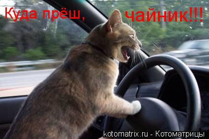 Котоматрица: Куда прёш, чайник!!!