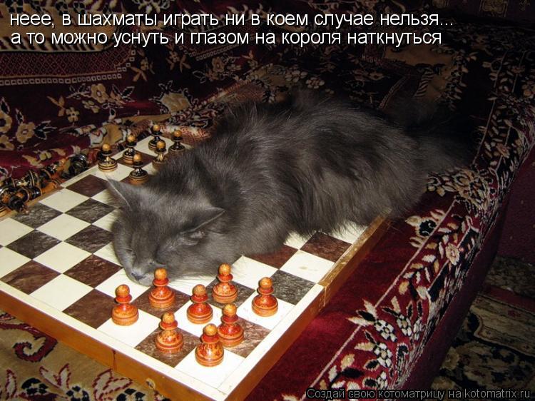 Котоматрица: неее, в шахматы играть ни в коем случае нельзя... а то можно уснуть и глазом на короля наткнуться