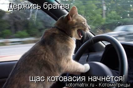 Котоматрица: Держись братва щас котовасия начнётся!