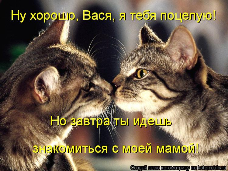 Котоматрица: Ну хорошо, Вася, я тебя поцелую!   знакомиться с моей мамой! Но завтра ты идешь