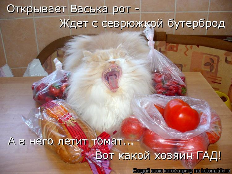 Котоматрица: Открывает Васька рот - Ждет с севрюжкой бутерброд А в него летит томат... Вот какой хозяин ГАД!